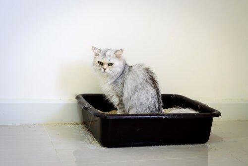 고양이 요로감염증의 모든 것