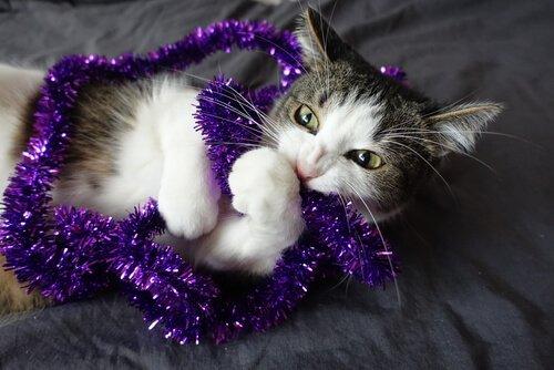 고양이가 주인의 옷을 씹는 이유는 무엇일까?