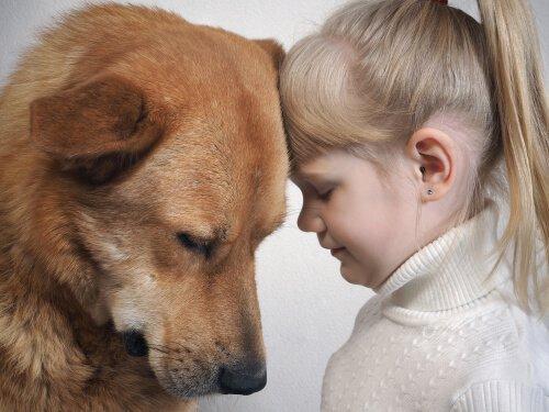개는 인간의 표정을 이해할까?