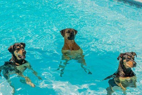어떻게 하면 개가 물을 무서워하지 않을까?