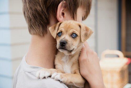 개가 아이들의 천식 증상을 줄여준다