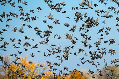 새의 기원은 무엇일까?