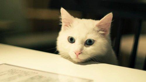 아파트에서 키우기 좋은 반려동물