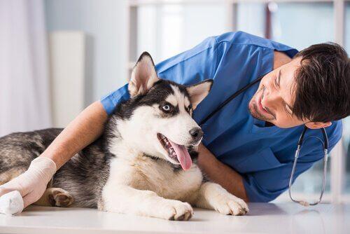 개가 경련을 일으킨다면 어떻게 해야 할까?