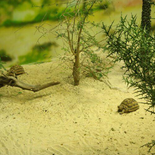거북의 호흡기 질환과 치료