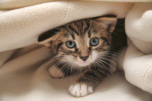 고양이를 둘러싼 6가지 속설
