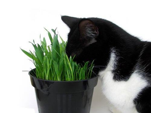 고양이에게 위험한 식물들