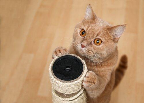 고양이에게 스크래쳐 사용법 가르치기