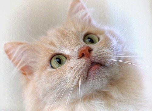 클리커로 고양이 훈련하기