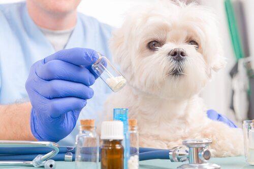 개에게 독이 되는 이부프로펜