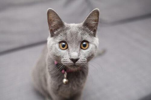 고양이에게 마사지를 해 주는 방법