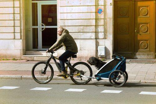 반려견을 태울 수 있는 자전거 트레일러