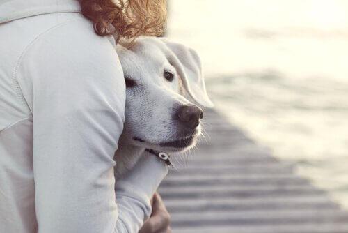 발정기에 있는 개를 목욕시킬 수 있을까?
