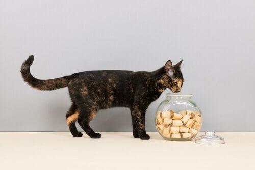 고양이가 사랑하는 7가지 음식 쿠키