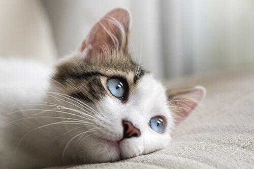 고양이에게 가장 흔히 발생하는 암의 유형