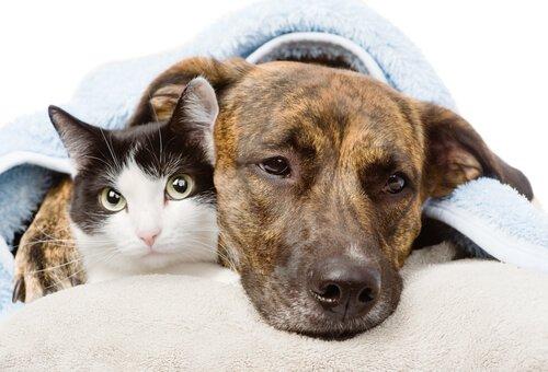 소염제는 개와 고양이에게 치명적일 수 있다