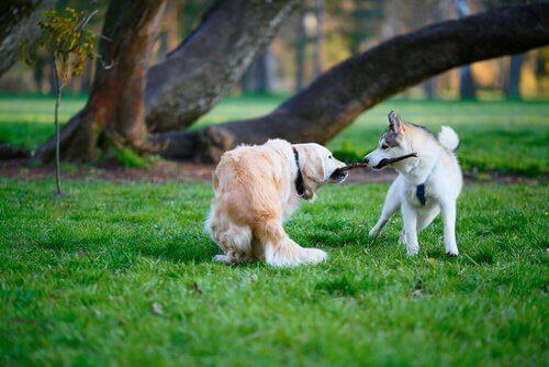 막대기 때문에 싸우는 개들