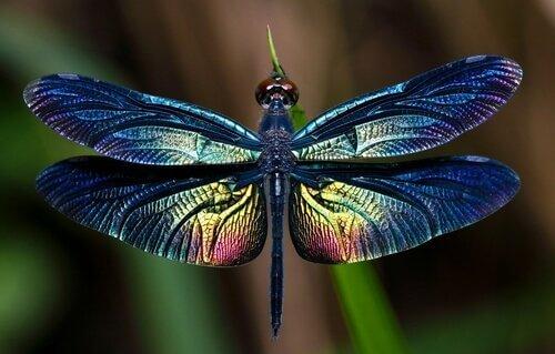 커다란 날개를 가진 곤충, 잠자리의 모든 것