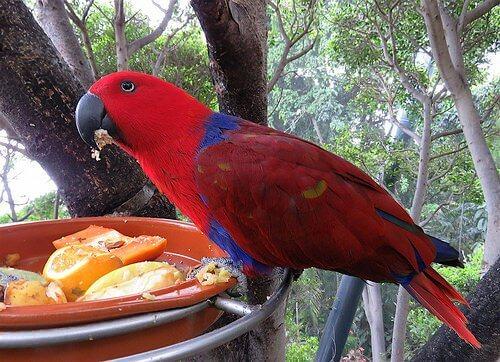 집에서 준비하는 앵무새 먹이