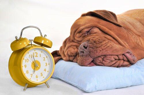 반려견에게 적정한 수면 시간은?