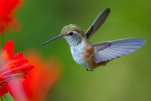 벌새의 매력적인 삶