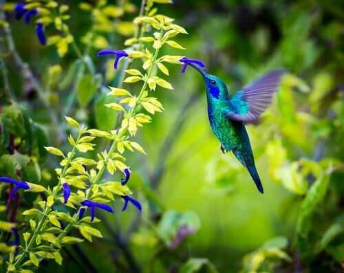 벌새의 매력적인 삶3
