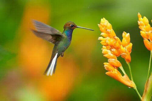 벌새의 매력적인 삶2