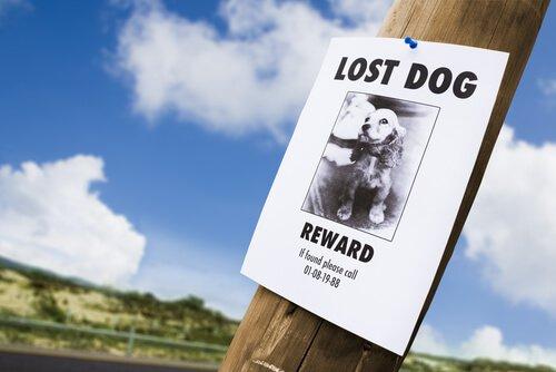 길 잃은 반려동물을 발견하면 어떻게 해야 할까?