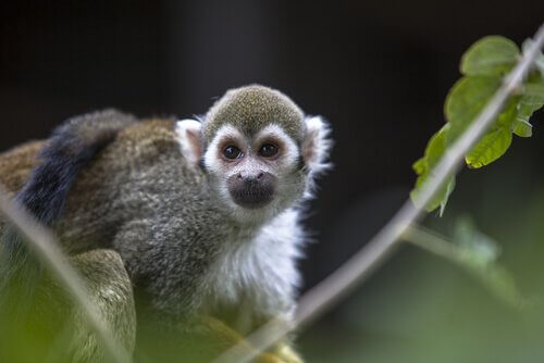 원숭이 십이지에 속하는 동물들