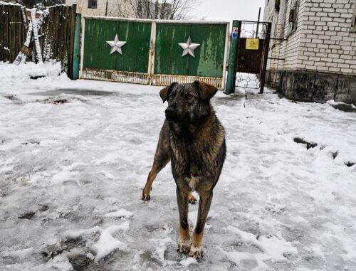 체르노빌에 사는 마지막 개들