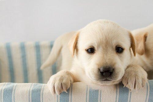 아직 외출할 수 없는 강아지를 돌보는 법