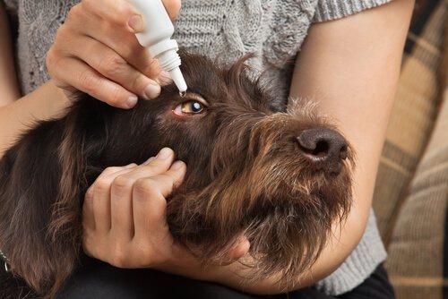 반려동물에게 약을 주는 방법