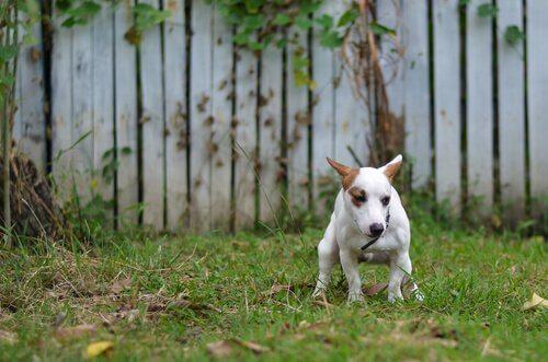 개가 걸릴 수 있는 편모충증은 무엇일까?
