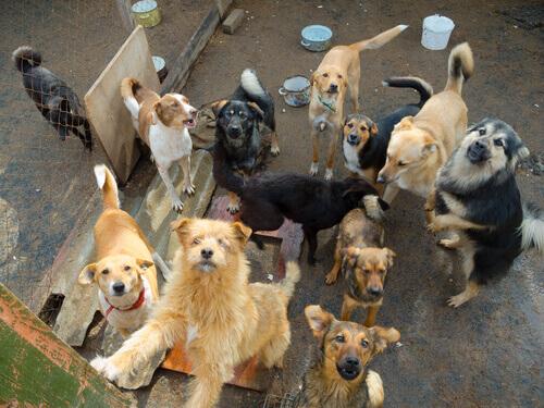 반려동물을 위한 건강 검진은 중요하다