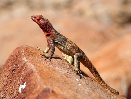 갈라파고스 제도의 야생동물