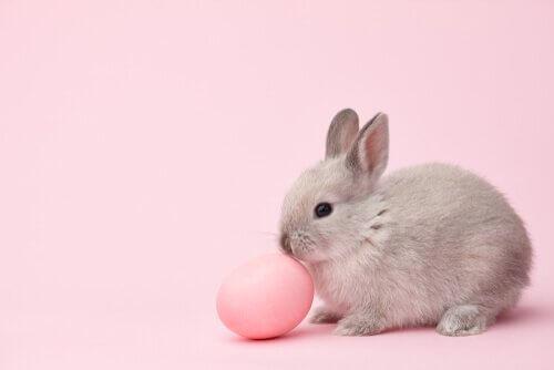 토끼를 위한 재미있고 독창적인 이름들
