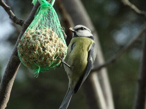 새들을 정원으로 유인하는 방법