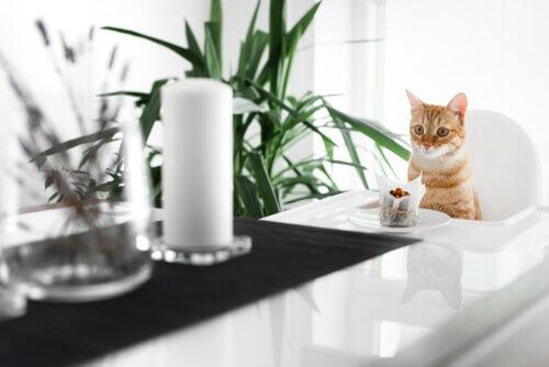 고양이를 위한 케이크 레시피