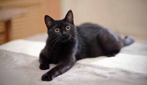소파에 앉은 고양이