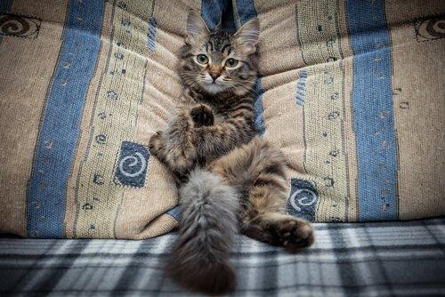 고양이가 소파에 올라가지 못하게 하는 법