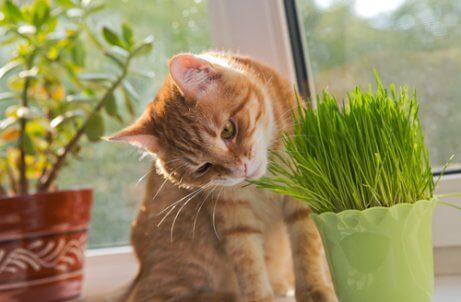 고양이의 이상한 행동 6가지