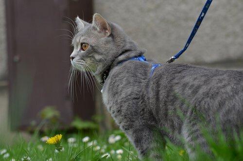 고양이와 함께 산책하는 방법