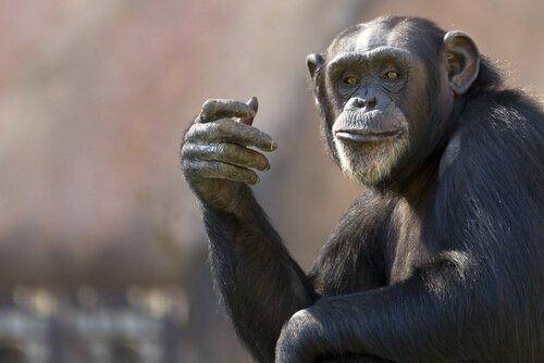 가장 똑똑한 동물 5종