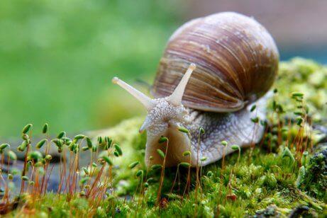 달팽이의 번식을 위해 집에서 준비할 것들