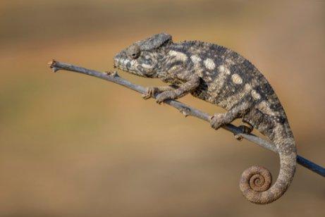 마다가스카르의 인상적인 야생동물