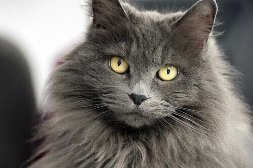 장모종 고양이에게 어울리는 이름 12가지