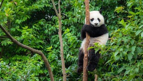중국 출신 동물 5종