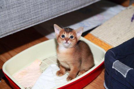 다른 고양이들보다 더 똑똑한 고양이는 어떤 품종일까?