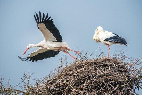 클레페탄과 말레나, 서로 사랑하는 두 마리의 새
