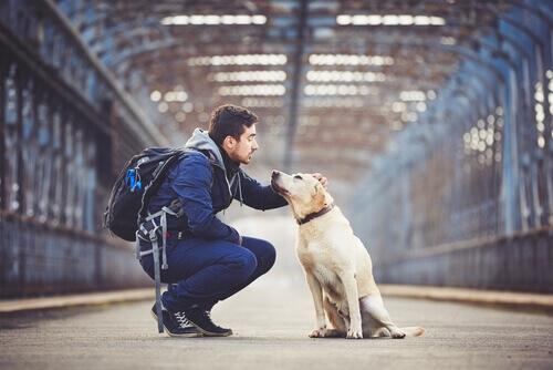 '펫 프렌들리' 여행: 반려견과 함께 갈 수 있는 여행지 5곳